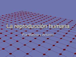 La reproducción humana acabao