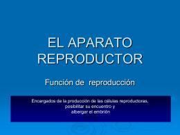 """ppt """"el aparato reproductor"""""""