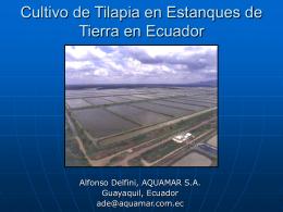 Cultivo y Exportación de Tilapia en Ecuador