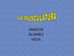LA MUSCULATURA - Educastur Hospedaje Web