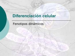 Diferenciación celular