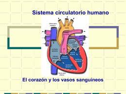 El corazón y los vasos sanguíneos ppt