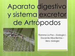 Sistema digestivo y excretor de Artrópodos Fiamma