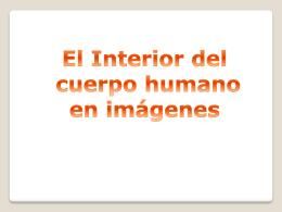 interior cuerpo humano