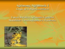 Agrimony, Agrimonia 1