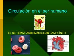 Circulación en el ser humano Academia (D.Diaz)