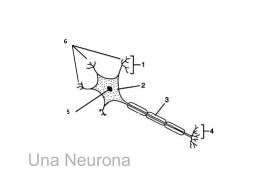 Modelo de Neurona con Claves PPT