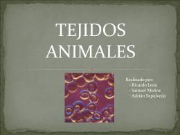 Ricardo León - tejidos animales