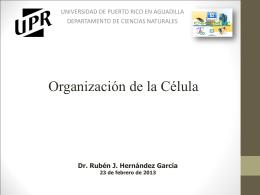 Célula Animal - CeCiMaT - Universidad de Puerto Rico en Aguadilla