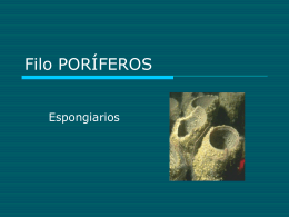 Filo PORÍFEROS - ies picos de urbión