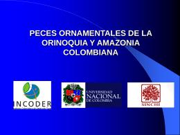 peces ornamentales de la orinoquia y amazonia colombiana incoder