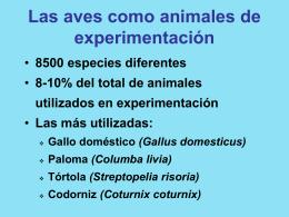 La rata como animal de experimentación