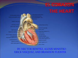 EL CORAZON THE HEART