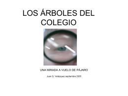 LOS ÁRBOLES DEL COLEGIO