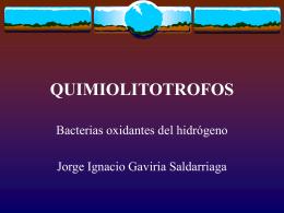 QUIMIOLITOTROFOS - Facultad de Ingeniería