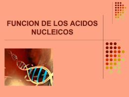 CÓDIGO GENÉTICO Transcripción, Traducción y Síntesis Proteica