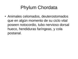Phylum Urochordata