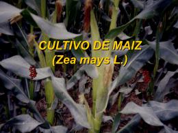 02.- Maiz