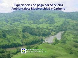 El proyecto Silvopastoril del BM - MercadosVerdes.com