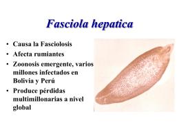 23_Proteasas_de_Fasciola_hepatica
