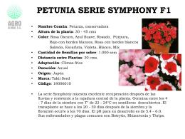 Petunia Serie Symphony F1 PetuniaserieSymphony