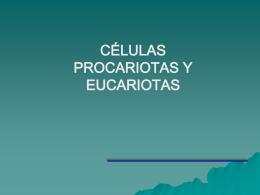celulas_eucariota_y_procariota