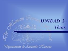 Tórax. Generalidades