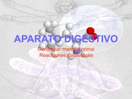 digestivo - Colegio Humberstone