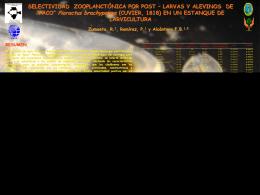 SELECTIVIDAD ZOOPLANCTÓNICA POR POST – LARVAS Y
