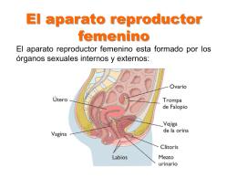 TEMA 7: ANATOMÍA Y FISIOLOGÍA DEL APARATO REPRODUCTOR