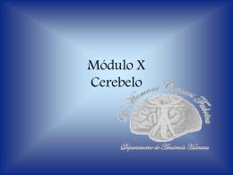 Cerebelo - eTableros
