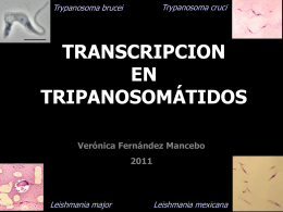 32_Transcripcion_en_Tripanosomatidos_2011