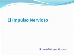 El Impulso Nervioso