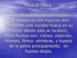 Médula Ósea.