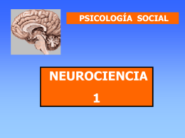 neurociencias-3.