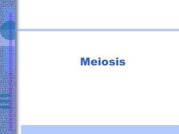 Meiosis - UTOPIA Psicologia
