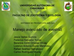 avestruz manejo avanzado - Universidad Autónoma de Chihuahua