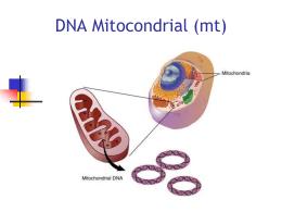DNAmit_2014 - Genética Molecular