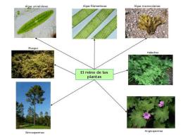 Presentación1 plantas (1049088)