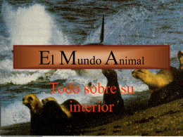 El Mundo Animal - I like the idea