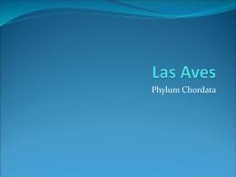 CLASE 14. BIOSISTEMATICA. AVES.1
