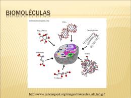 Biomoleculas_2