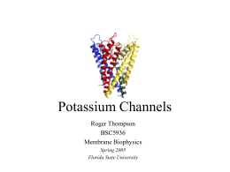 Potassium Ion Channel - Florida State University