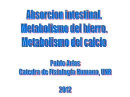 Metabolismo del Hierro y el Calcio. - fisiologia