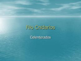 Filo Cnidarios - ies picos de urbión