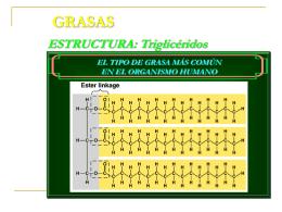 GRASAS - Saludmed