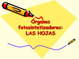Organos fotosintetizadores