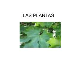 LAS PLANTAS. Manuel M