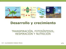 transpiración y fotosintesis