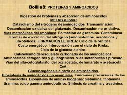 Metabolismo de Proteinas 1- 2013